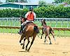 Pranzare running away at Delaware Park on 6/2417