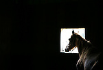 A horse looks through a stall window at Double J Stables on Thursday, September 30, 2010. Double J Stables is home to a variety of animals, including horses, goats, cats and dogs..Photo by Jill Seelmeyer