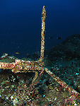 Qixingyan ('Seven Star Rock'), Taiwan -- Rusty anchor on an underwater ledge.