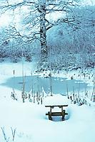 Gartenteich, Teich im Winter bei Eis und Schnee