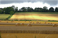 Cereal field, Hampshire.