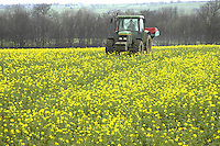Applying Nitram at the rate of 125kg per hectare to Pollen oileed rape on Nichols and Co.'s Rokeby Grange, Barnard Castle, Co. Durham. The crop was drilled on September 5th and 6th, later than normal because of the wet Autumn.