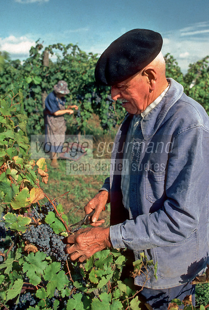 Europe/France/Aquitaine/24/Dordogne/Env de Bergerac&nbsp;: Vendanges &agrave; Ch&acirc;teau Lavaud AOC Bergerac [Non destin&eacute; &agrave; un usage publicitaire - Not intended for an advertising use]<br />  PHOTO D'ARCHIVES // ARCHIVAL IMAGES<br /> FRANCE 1980