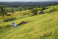 Jatiluwih, Bali, Indonesia.  Terraced Rice Fields.  Political Party Flags Flying in the Fields.