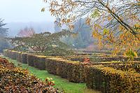 France, Loir-et-Cher (41), Cellettes, Château de Beauregard et parc, le jardin des Portraits en automne imaginé par Gilles Clément, chambres entourées de haies de charmes