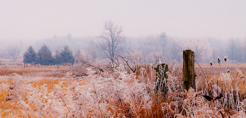 SUBJECT: A Winter Scene IMAGE: Hoare frost covers field and forest on a winter morning. Vibrant foreground colours dissolve into mist among the trees in the distance.
