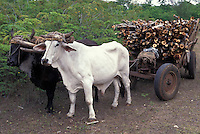 Oxcart with firewood; Cuba, Zapata Swamp
