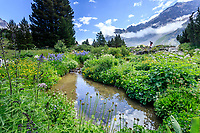 France, Hautes-Alpes (05), Villar-d'Arène, jardin alpin du Lautaret