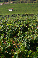 pinot noir vineyard hut chambertin clos de beze gc gevrey-ch cote de nuits burgundy france