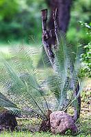 La palma de la Virge  <br /> <br /> ****<br /> Reserva Monte Mojino (ReMM) de la Natural Culture International (NCI)<br /> <br /> Credito:LuisGutierrez