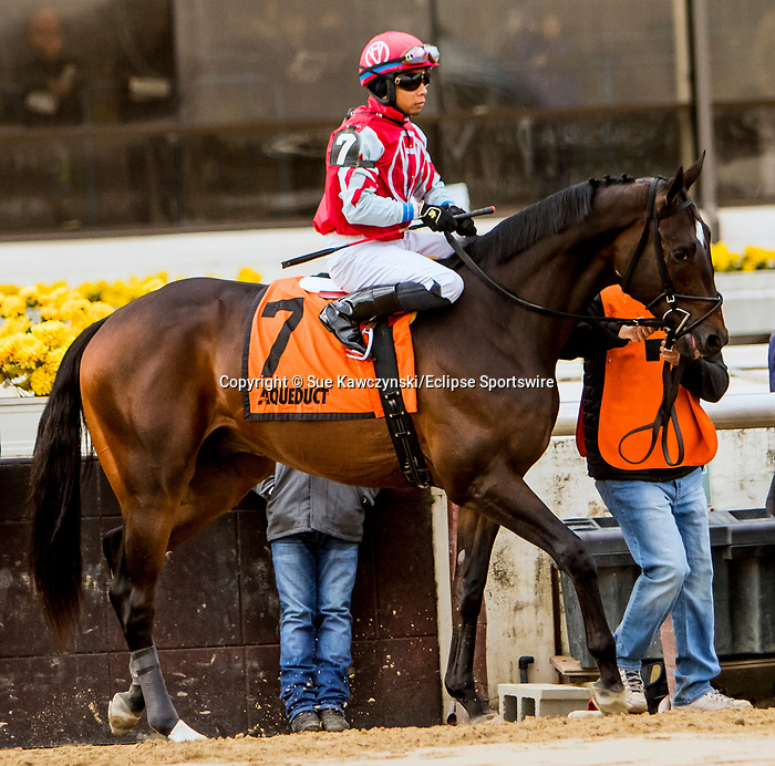 DECEMBER 01, 2018 : #7, Tax in the Remsen  Stakes at Aqueduct Racetrack on December 24, 2018 in Ozone Park, NY.  Sue Kawczynski/ESW/CSM