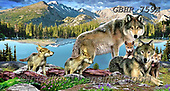 Howard, REALISTIC ANIMALS, REALISTISCHE TIERE, ANIMALES REALISTICOS,wolf,wolfs paintings+++++,GBHR759A,#a#, EVERYDAY
