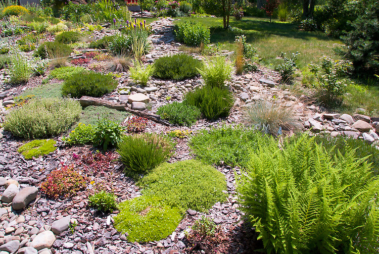 Perfect Hillisde Plantings, Sunny Rocky Sloped Alpine Rock Garden With Many Tough  Drought Tolerant Plants Pictures Gallery