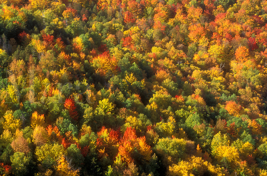 AJ5708, woodland, forest, wilderness, woods, environment, maple trees, background, fall foliage, autumn, An aerial view of a forest of colorful maple trees in the autumn in the state of Vermont.