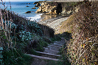 Steps lead down to the rocky beach along the South Whitehouse Creek Trail at Año Nuevo State Reserve.
