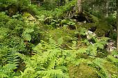 Varen, mossen en heide in bos langs La Petite Meurthe in de Vogezen.