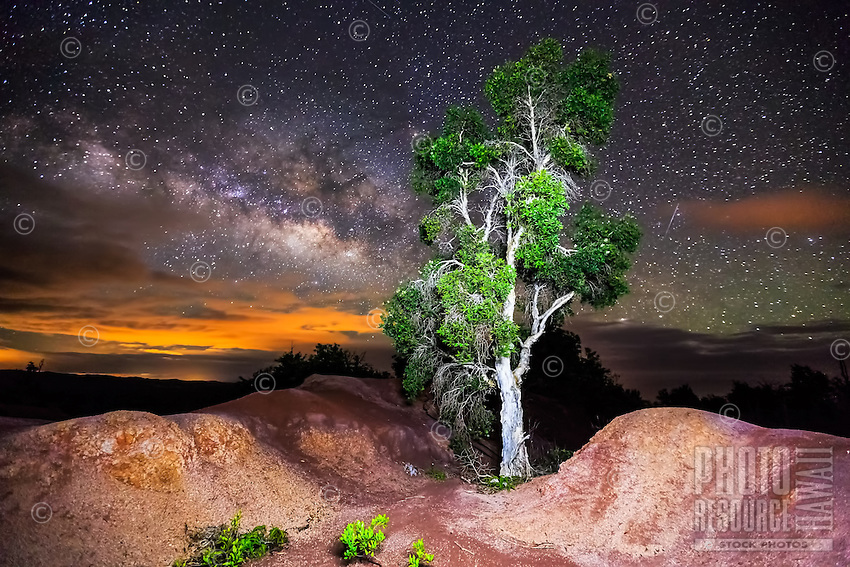 A paper bark tree on the slopes of Waimea Canyon under a starry night sky, backed by the Milky Way and the amber hues of sunset over distant Koke'e State Park, Kaua'i.