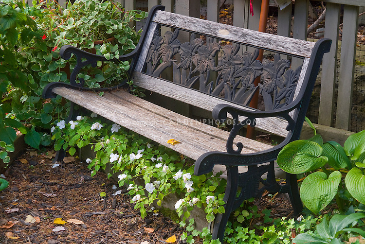 Garden bench underplanted with windowbox runner box container of annual white impatiens flowers, mixed next to perennial plants hostas, ivy Hedera, Vinca, picket fence, shade garden