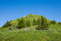 Austria, Vorarlberg, Kleinwalsertal, Mittelberg: summit Walmendingerhorn 1.990m, an alpine flowers nature trail leading from cable car upper station to the summit | Oesterreich, Vorarlberg, Kleinwalsertal, Mittelberg: das Walmendingerhorn 1.990 m, von der Bergstation der Walmendingerhornbahn fuehrt ein Alpenblumenlehrpfad zum Gipfelkreuz