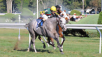 Unbridled Command (no. 3), ridden by Ramon Dominguez and trained by Thomas Bush, wins the grade 3 Saranac Stakes for three year olds on September 2, 2012 at Saratoga Race Track in Saratoga Springs, New York.  (Bob Mayberger/Eclipse Sportswire)