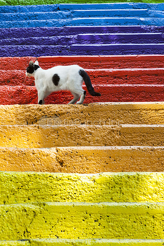 Cat standing on colourful painted steps, Karakoy region, Istanbul, Turkey  May 2015.<br /> CAP/MEL<br /> &copy;MEL/Capital Pictures /MediaPunch ***NORTH AND SOUTH AMERICA ONLY***
