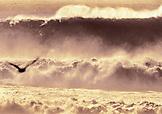 USA, California, Half Moon Bay, a man surfing an enormous wave at Maverick's Surf Break (B&W)