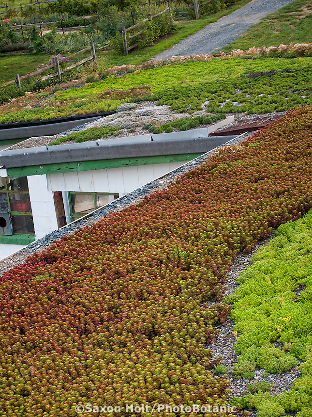 Green roof of succulents in Maryland rooftop garden