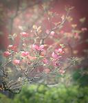 4.16.12 - Blooming...