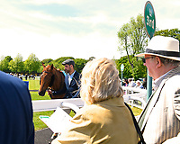 Racegoers watch a horse in the parade ring during Afternoon Racing at Salisbury Racecourse on 17th May 2018