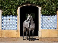 Marialva da Broa at the stables of Quinta da Broa. Portugal