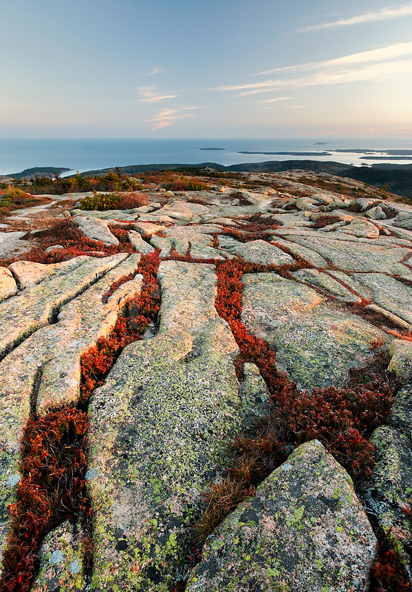 Fall color amidst granite bedrock on summit of Cadillac Mountain at sunset, Mount Desert Island, Acadia National Park, near Bar Harbor, Maine, USA