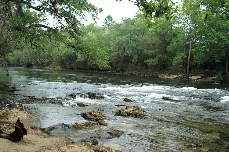 As rapids go, the rapids on the Chipola are nothing to write home about.  However, there are very few rivers in Florida that have rapids, so they are treasured.  The Chipola River flows through Calhoun county, Florida.