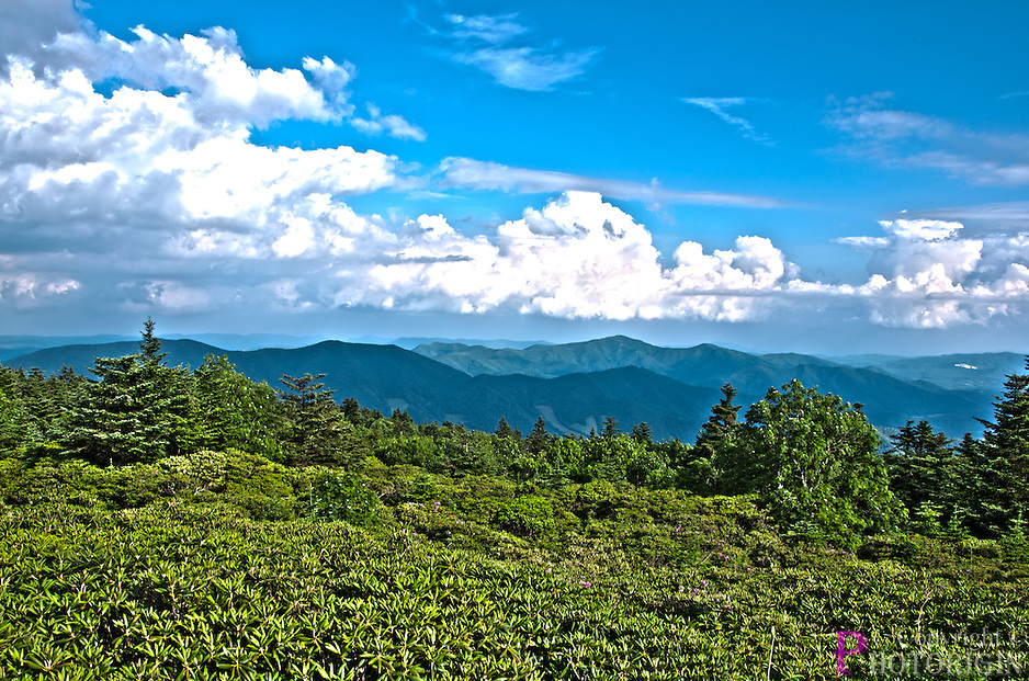 With clouds on top, Roan mountain in the middle and the garden on the bottom, a beautiful scenic view of Rhododendron garden on a sunny day.