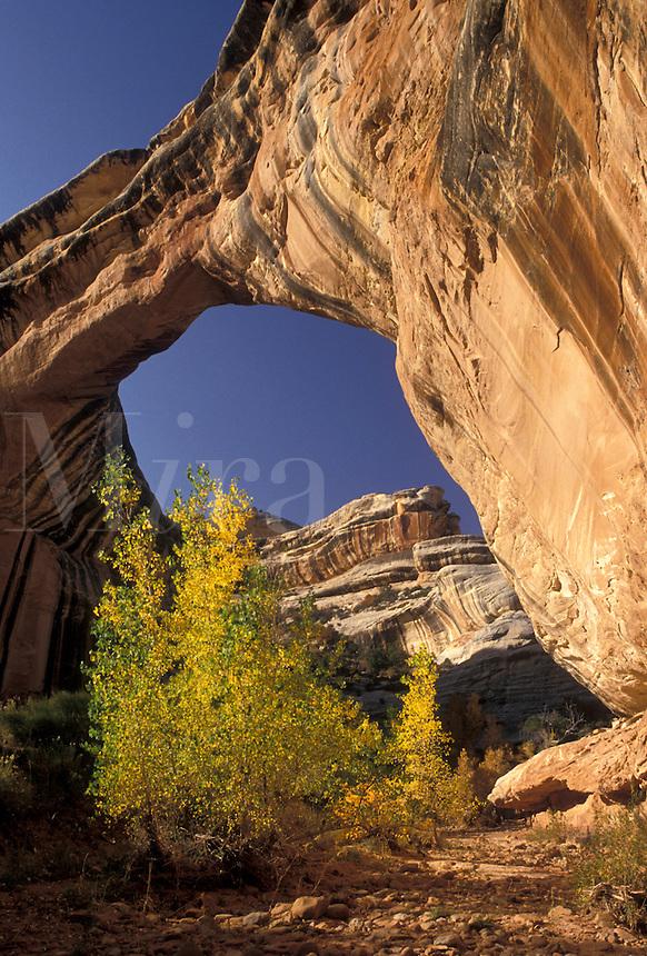 AJ3857, Natural Bridges, Natural Bridges National Monument, Utah, The Sipapu Bridge in Natural Bridges Nat'l Monument in the state of Utah.