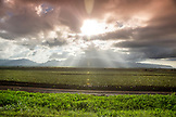USA, Oahu, Hawaii, looking across pineapple fields from the Kamehameha Highway on the North Shore near Haliewa