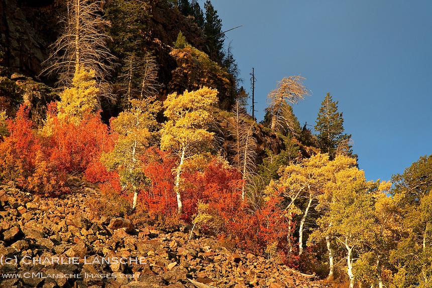 Vibrant late autumn foliage erupts from loose scree.  Uinta Mountains, Utah.