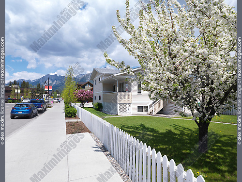 Springtime city scenery of blooming trees in Canmore, town in Alberta Rockies with mountains in the background. Canmore, Alberta, Canada.