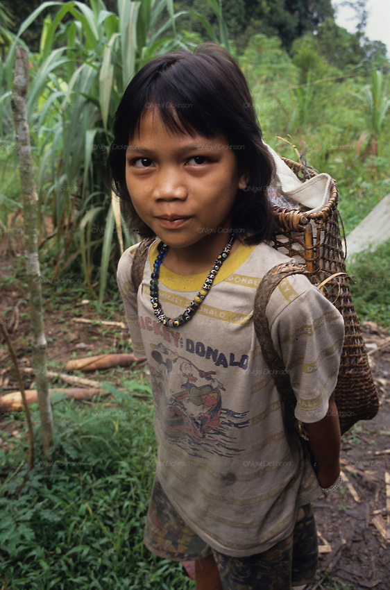 DAYAK GIRL, MALAYSIA. Sarawak, Borneo, South East Asia.  Dayak girl with rattan rucksack. Tropical rainforest and one of the world's richest, oldest eco-systems, flora and fauna, under threat from development, logging and deforestation. Home to indigenous Dayak native tribal peoples, farming by slash and burn cultivation, fishing and hunting wild boar. Home to the Penan, traditional nomadic hunter-gatherers, of whom only one thousand survive, eating roots, and hunting wild animals with blowpipes. Animists, Christians, they still practice traditional medicine from herbs and plants. Native people have mounted protests and blockades against logging concessions, many have been arrested and imprisoned.