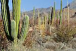 Baja desert, Baja California, Mexico