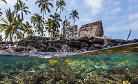 Tropical reef fish swim in the waters surrounding the national historic park Pu'uhonua o Honaunau (or City of Refuge) on the Big Island of Hawai'i.