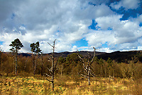 Coilhallan Wood near Callander, Loch Lomond and the Trossachs National Park, Stirlingshire