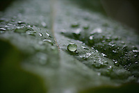 Macro Shot of Water Droplets on a Leaf
