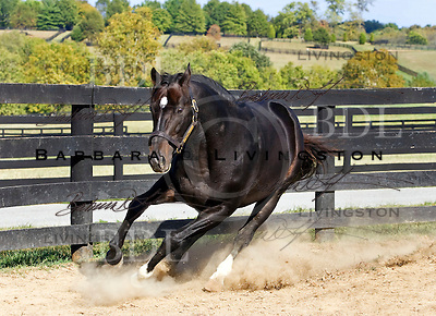 Storm Cat, by Storm Bird - Terlingua, by Secretariat.  At Overbrook Farm, 2007.