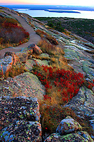 Autumn Pathway atop Cadillac Mt.  #A6