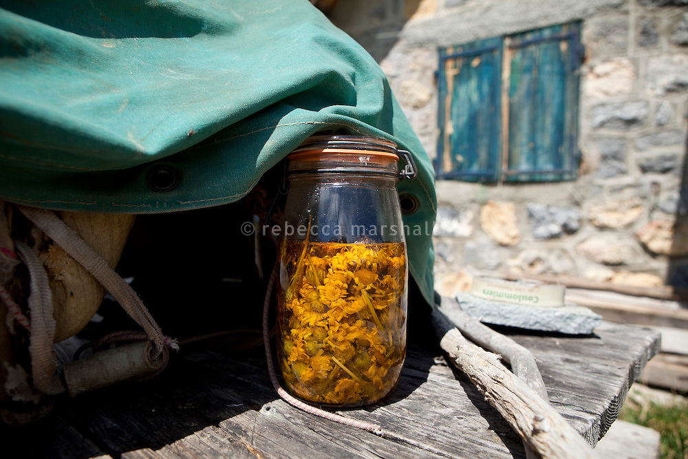 A jar of wild arnica flowers steeping in olive oil outside the shepherd's cabin where Bernard Bruno lives during the summer, Plateau de Longon, Mercantour National Park, French Alps, France, 01 August 2013. Bernard collects the flowers from the surrounding mountainsides, soaks them in olive oil and then leaves them in the sunshine for 40 days before straining the mixture to produce arnica tincture, a remedy for swelling, bruising, joint pain, and sprains.