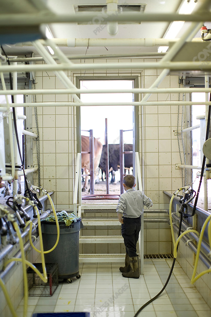 """Fundamentalist Mormon group F.L.D.S.,  David Jeffs working in the dairy, """"Yearning for Zion"""" compound in Eldorado, Texas, USA, February 11, 2009"""
