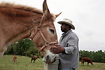 May 22, 2010. Baskerville, Virginia.. John Boyd, Jr. pets his mule, named 40 Acres, as he feeds the cattle on the family farm that they have owned for over 100 years.. Dr. John Boyd, Jr., a Virginia farmer, has lobbied the White House and Congress for the better part of two decades on behalf of black farmers. .A $1.25 billion settlement he helped to negotiate in February for the federal government to compensate black farmers has become ensnared in Washington. .Meanwhile, many elderly farmers who stand to benefit are dying before they can seek restitution..Their case, known as the black farmers settlement, and commonly referred to as Pigford II, is the second phase of a federal lawsuit settled in 1999. It covers more than 80,000 farmers who claim they were denied critical aid comparable to what white farmers received from the Department of Agriculture between 1981 and 1996 because of the color of their skin..Congress reopened the case in 2008, and set aside $100 million to address the late claims. President Barack Obama, who co-sponsored the 2008 measure when he was in the Senate, created a $1.15 billion line item in his budget for the 2010 fiscal year to cover the new class of litigants..The money was less than half of the $2.5 billion the farmers had fought for, but the administration's promise of a quick resolution prompted them to accept the deal.  .