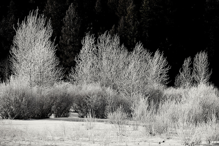 Hoarfrost covers the vegetation in Montana.