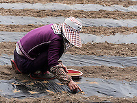 S&auml;en von Gem&uuml;se bei Gyeongju, Provinz Gyeongsangbuk-do, S&uuml;dkorea, Asien<br /> Sowing of vegetables near Gyeongju,  province Gyeongsangbuk-do, South Korea, Asia