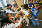 Students take a break from their final exam studies to pet Rexie, a 3-year-old collie, during Puppies in Perkins today. Rexie was just one of the therapy dogs on hand - other pooches included two labs and a bull mastiff.